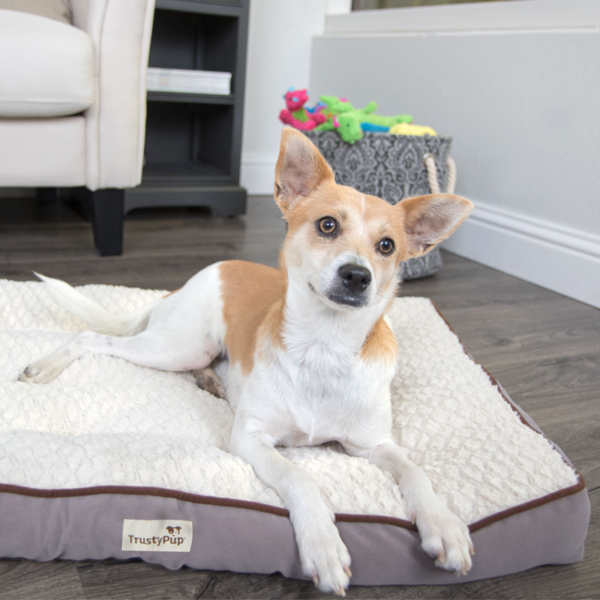 Tuft Love Pet Bed Gray with Pet