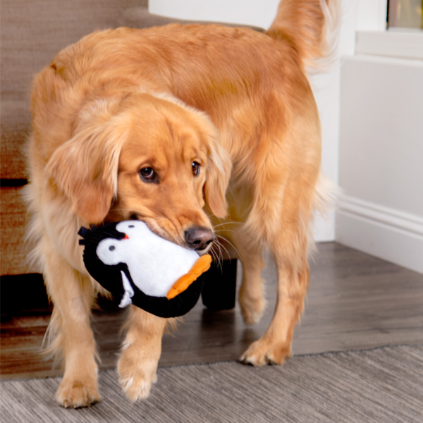 Strong N Silent Penguin with Dog