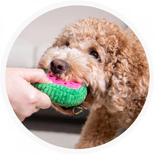 DogToy-Watermellon-Lifestyle